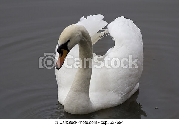 Swan - csp5637694