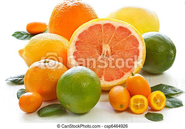 citrus. - csp6464926