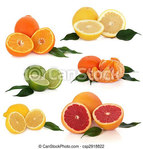 Citrus Fruit Collection - csp2918822