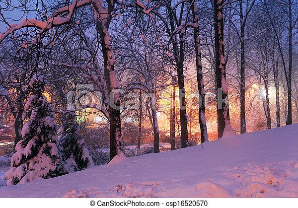 città, neve, albero, luci - csp16520570
