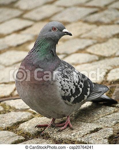 City Dove - csp20764241
