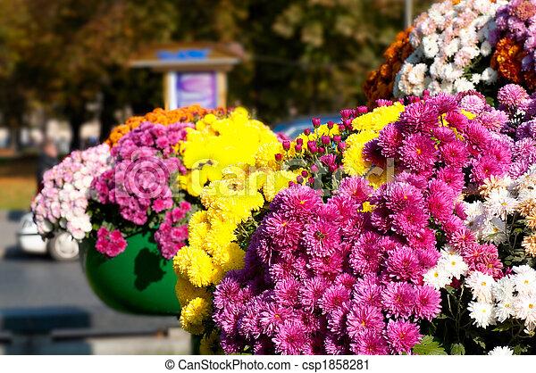 City flowers - csp1858281