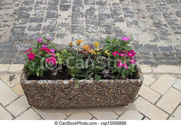 City flowers - csp15569889
