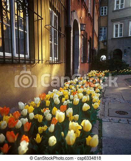 City flowers. - csp6334818
