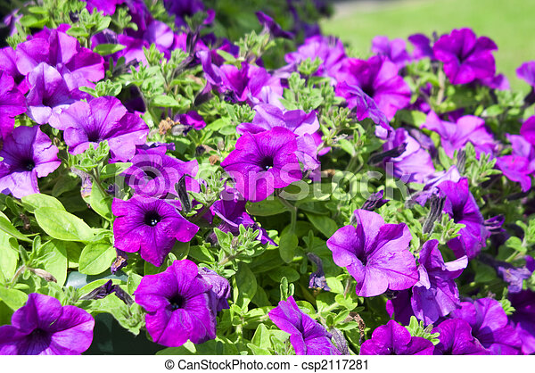 City flowers set two - csp2117281