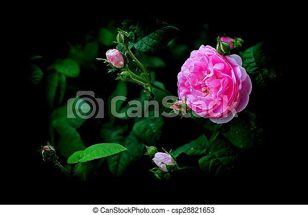 City flowers. - csp28821653