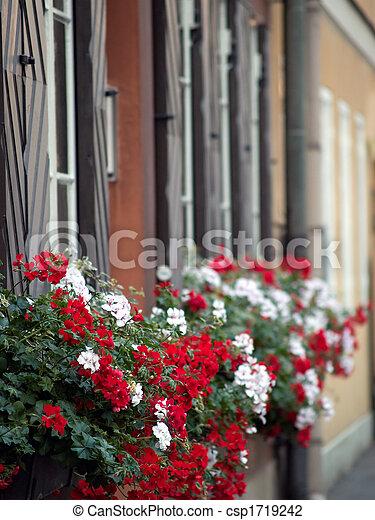 City Flowers - csp1719242
