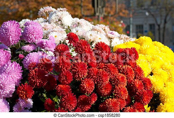 City flowers - csp1858280