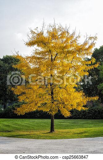 City Park in Autumn - csp25663847