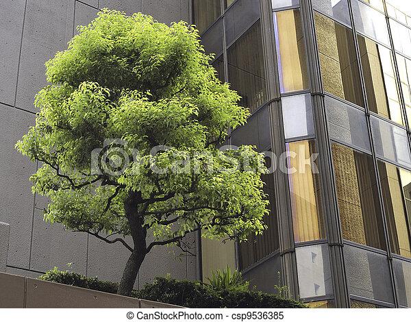 Árbol de ciudad - csp9536385
