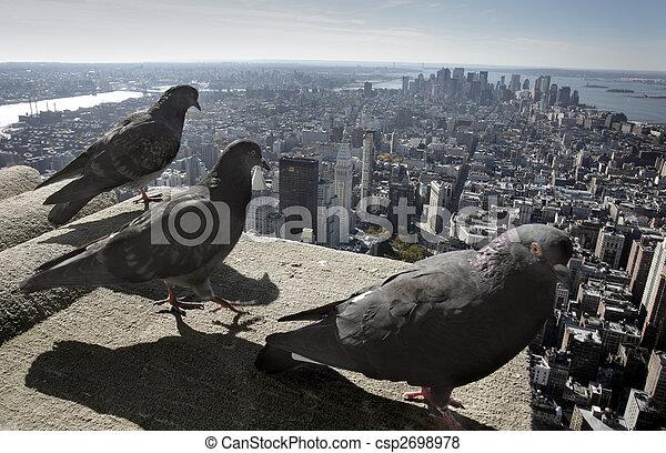 ciudad nueva york - csp2698978