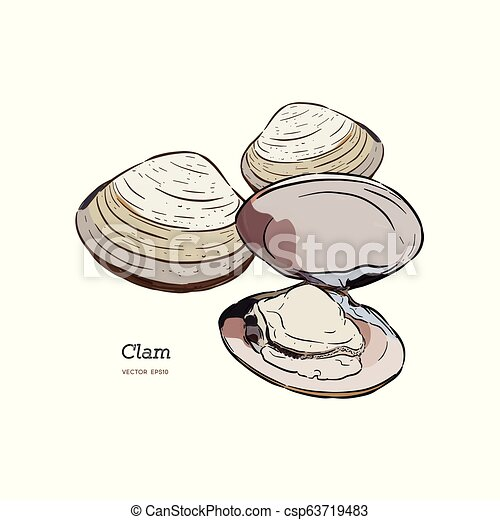 Clams Mussels Seafood Sketch Style Vector Illustration Isolated On White Background Drawing Of Clams As A Common Seafood Canstock