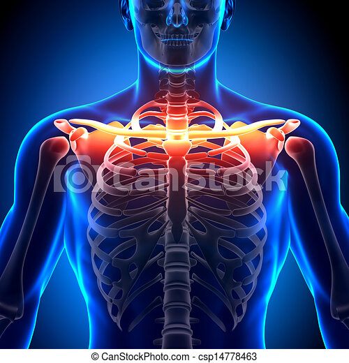 Clavicle stock photo images 1337 clavicle royalty free pictures clavicle stock photo images 1337 clavicle royalty free pictures and photos available to download from thousands of stock photographers ccuart Image collections