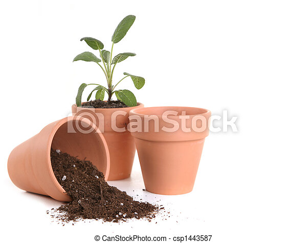 Clay Pots With Dirt and Seedling - csp1443587