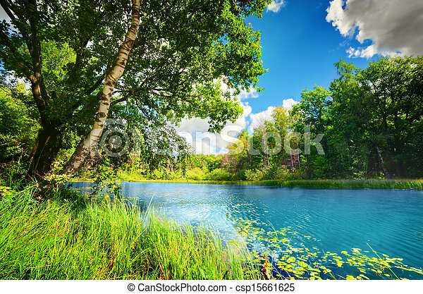 Clean lake in green spring summer forest - csp15661625
