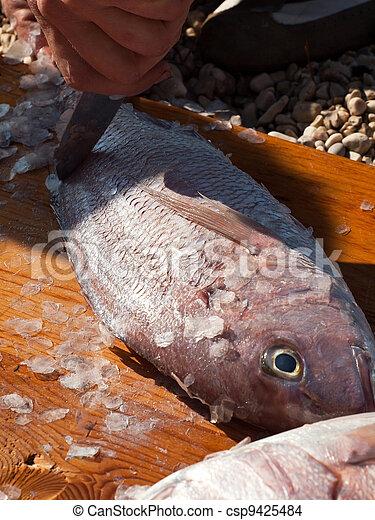 Cleaning fish dentex - csp9425484