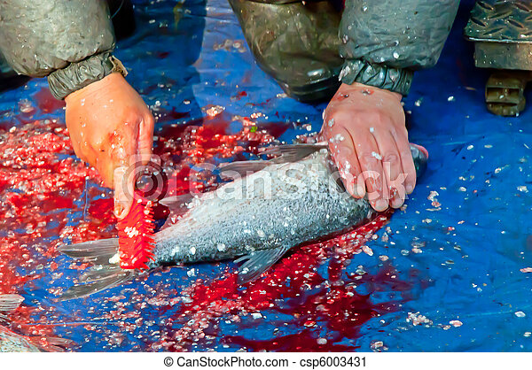 cleaning fish - csp6003431