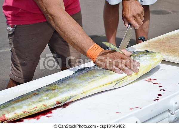 Cleaning fish - csp13146402