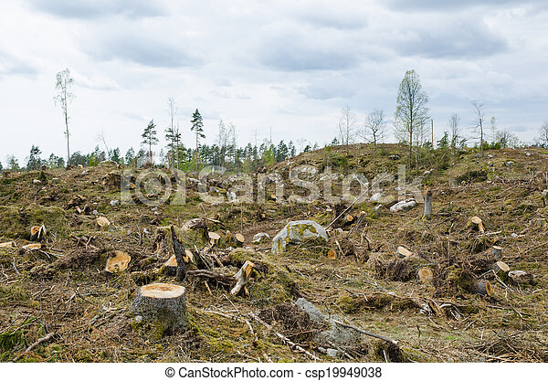 Clear cut forest area - csp19949038