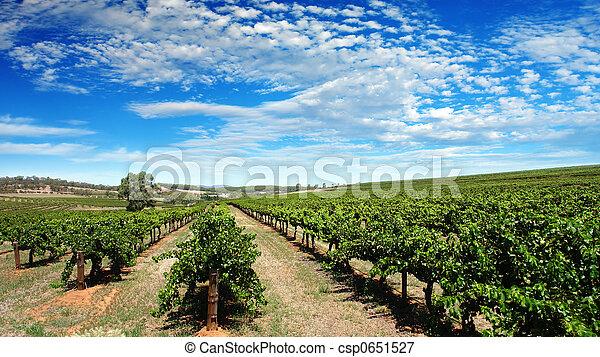 Clear Sky Vineyard - csp0651527