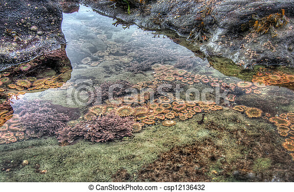 Clear tidal pool with sea life - csp12136432