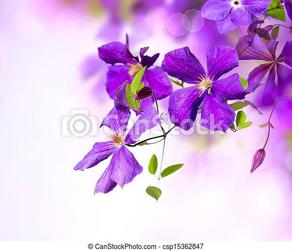 Clematis Flower. Violet Clematis Flowers Art Border Design - csp15362847