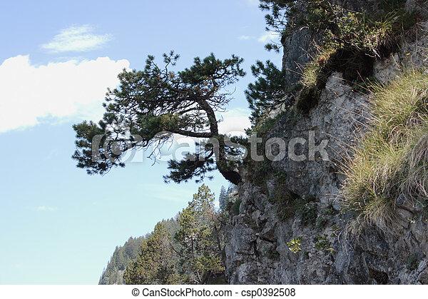 Cliff Tree - csp0392508