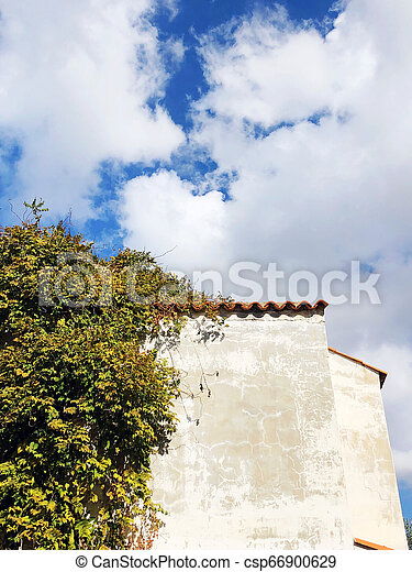 Climbing plant with green leaves on the wall of the house in the fall with old plaster - csp66900629