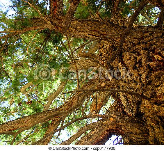 Climbing Tree - csp0177980