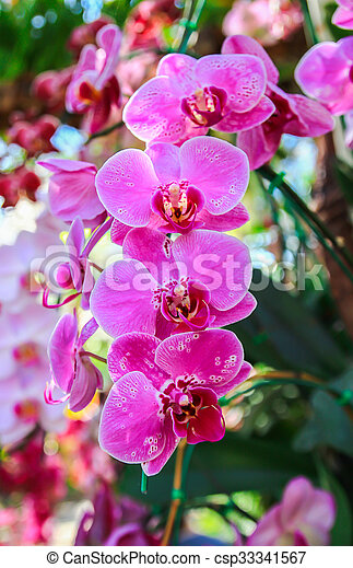 Close up beautiful pink orchid - csp33341567