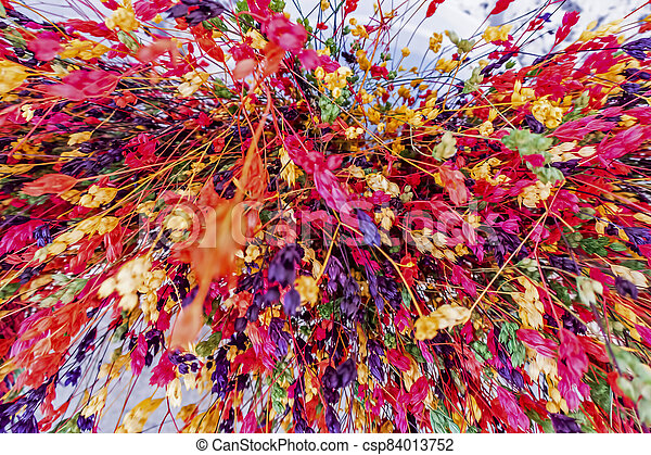 close up colorful dried flowers - csp84013752