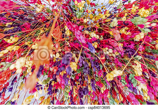 close up colorful dried flowers - csp84013695