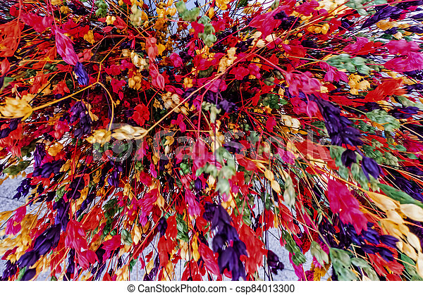 close up colorful dried flowers - csp84013300
