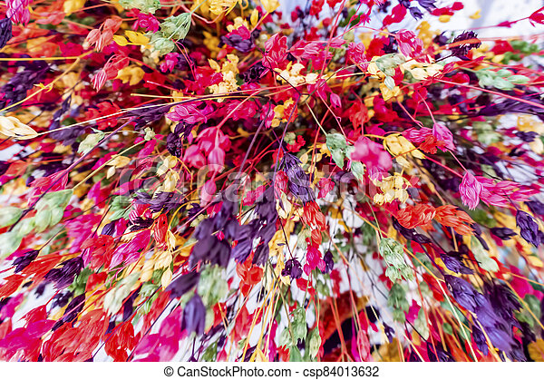 close up colorful dried flowers - csp84013632