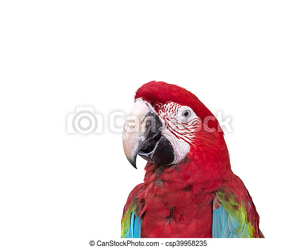 Close up colorful parrot macaw isolated on white - csp39958235