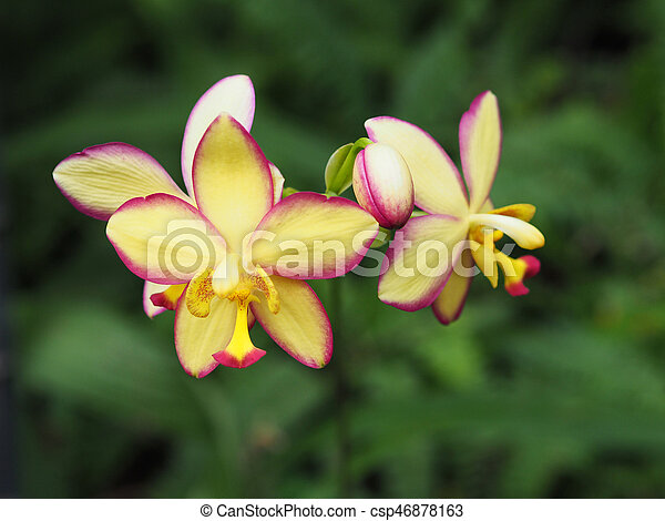 Close up colorful wild orchid - csp46878163