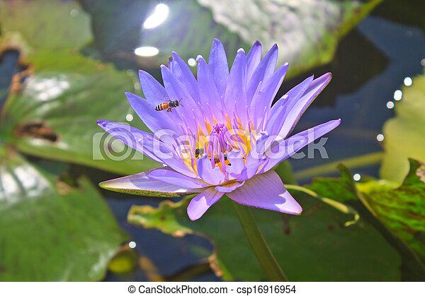 Close up lotus flower - csp16916954