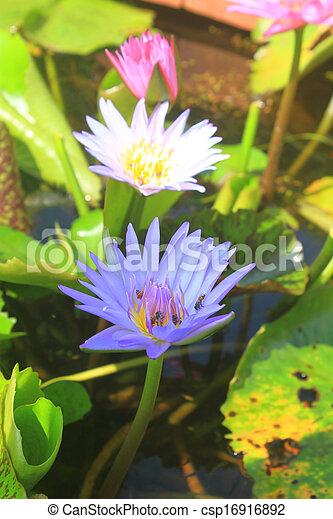 Close up lotus flower - csp16916892
