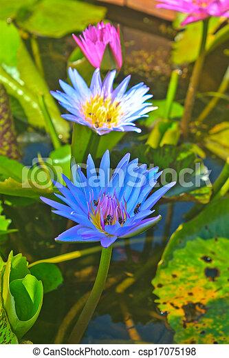 Close up lotus flower - csp17075198