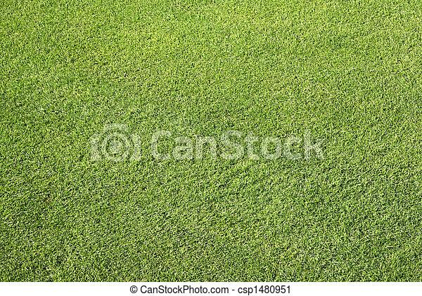 Close up neat cut grass. - csp1480951