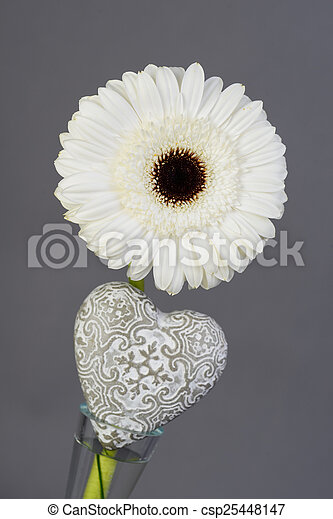 Close up of a beautiful single white daisy with heart shape