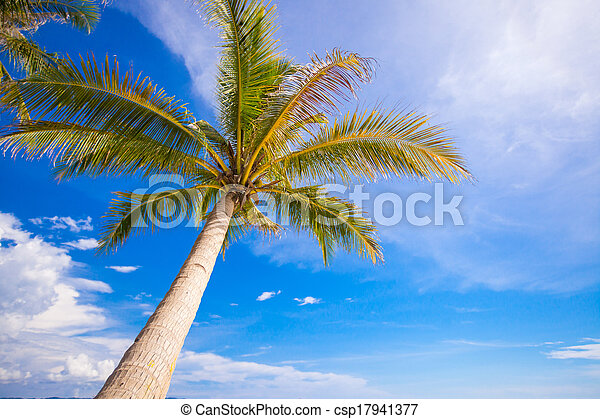 Close-up of a big palm tree on background blue sky - csp17941377