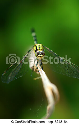 Close-up of a green dragonfly - csp16748184