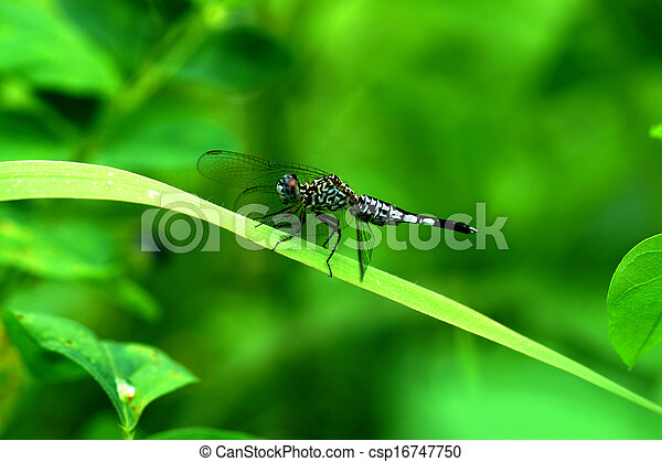 Close-up of a green dragonfly - csp16747750