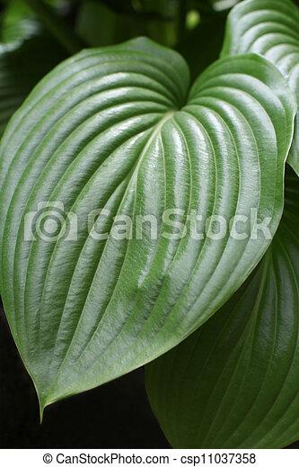Close-up of a green leaf - csp11037358