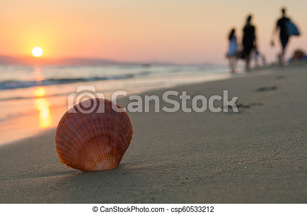 close up of a seashell while people are leaving the beach at sunset. Selective focus - csp60533212