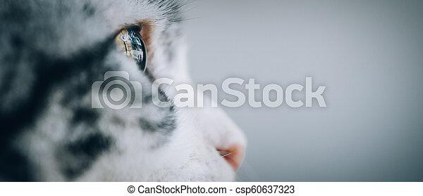 Close up of beautiful cat eyes - csp60637323