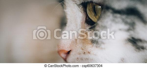 Close up of beautiful cat eyes - csp60637304