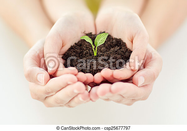close up of child and parent hands holding sprout - csp25677797