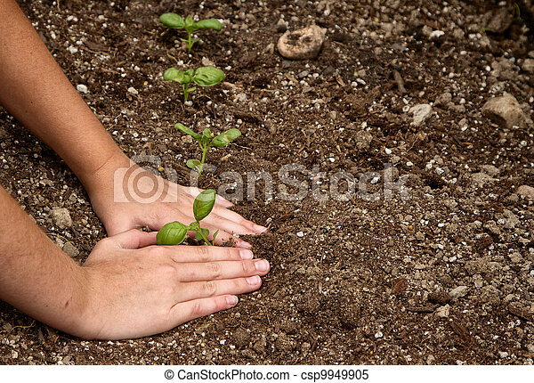 Close-up of child planting a small plant - csp9949905